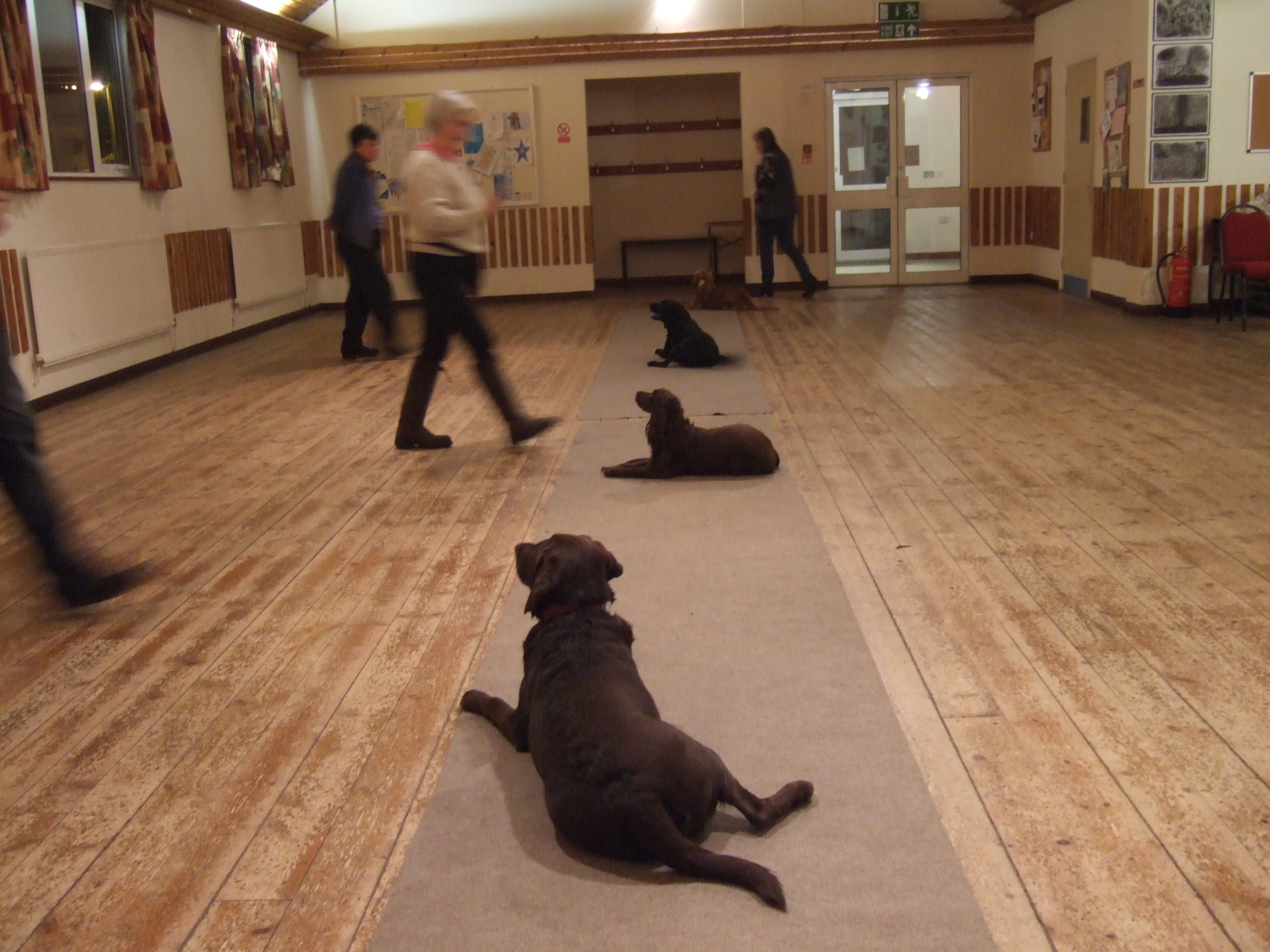 dog obedience training at Freston