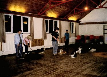 Dog obedience stay training